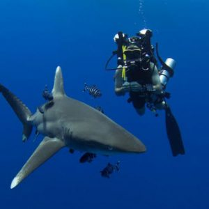 The best Red Sea diving spots ever ( Daedalus Reef )