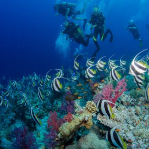 Best Red Sea diving spots ever ( Jackson Reef )